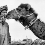 Riad Aicha - Sahara Adventures 2
